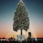 今年の冬は世界一のクリスマスツリーを見に、神戸に行こう!